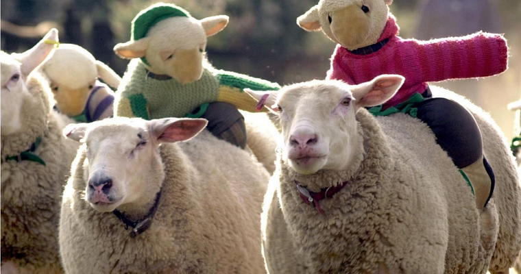 Sheep Grand National